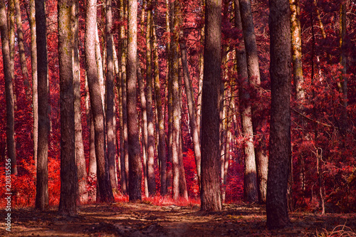 Photo  red autumn forest terrible and spectacular no one around