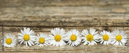 Deurstickers Madeliefjes Panoramic image of daisy flowers on rustic wood