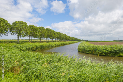 Tuinposter Kanaal Waving reed in the wind along the shore of a canal in summer