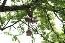 Canvas Shoes Hanging From Tree...