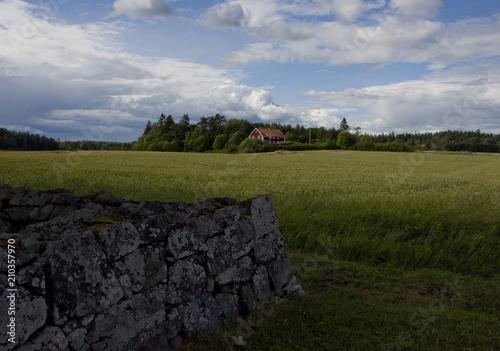 Poster Donkergrijs Midsummer landscape at Lovö in Stockholm