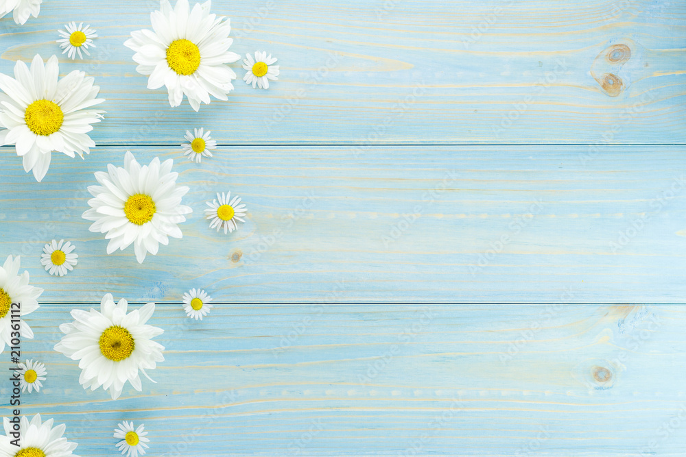 Fototapeta White daisies and garden flowers on a light blue worn wooden table. The flowers are arranged side, empty space left on the other side.