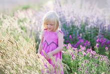 Kleines Mädchen, Welches Das Lavendelfeld Betrachtet