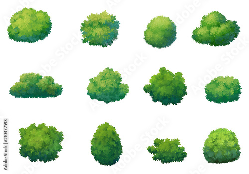 Fotografie, Obraz illustration shrub for cartoon isolated on white background