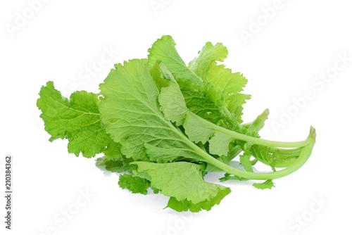 Fotografie, Obraz green mustard vegetable isolated on white background