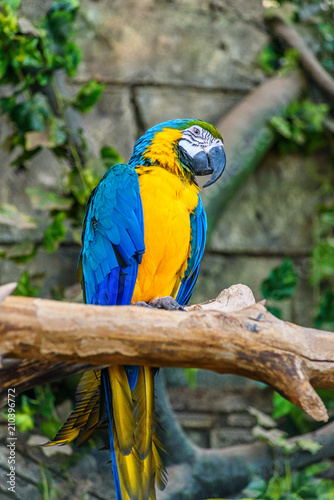Keuken foto achterwand Papegaai beautiful parrot in zoo