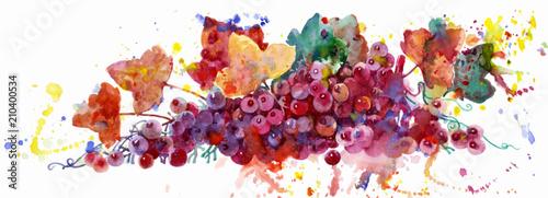 winogrono winorośl 002