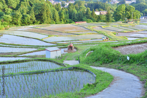 Tuinposter Rijstvelden Terraced paddy field in Japan