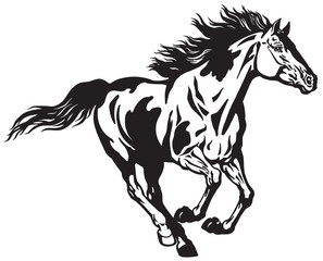 horse running free . Pinto colored wild pony mustang in the gallop . Black and white vector illustration