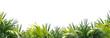 palmenblätter am unteren rand