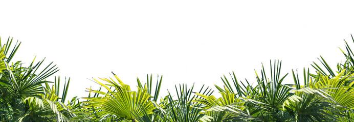 Panel Szklany Podświetlane Liście palmenblätter am unteren rand