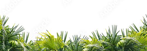 palmenblätter am unteren rand Canvas