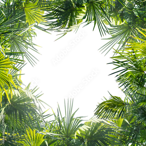 palmengarten Fototapete