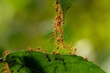 Ant Action Standing.Ant Bridge...