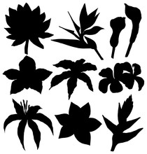 Tropical Flowers Silhouettes Set - Water Lily, Orchid, Clematis, Plumeria, Frangipani, Bird Of Paradise And Hibiscus