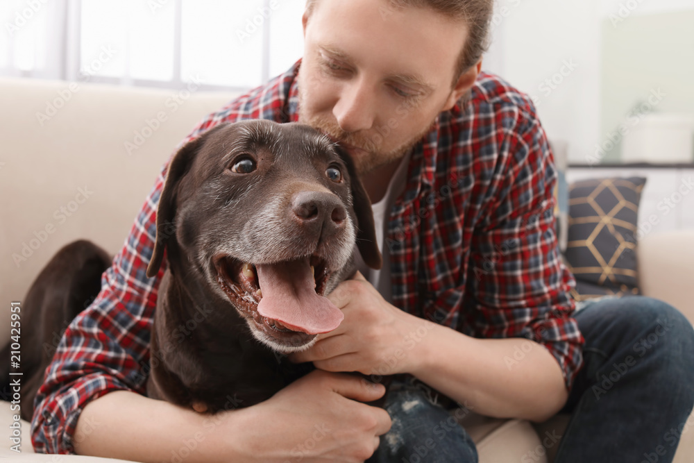 Fototapety, obrazy: Adorable brown labrador retriever with owner on couch indoors