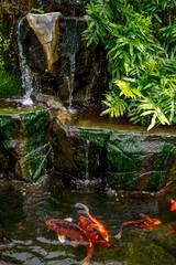 Obraz na SzkleKoi in Water Garden