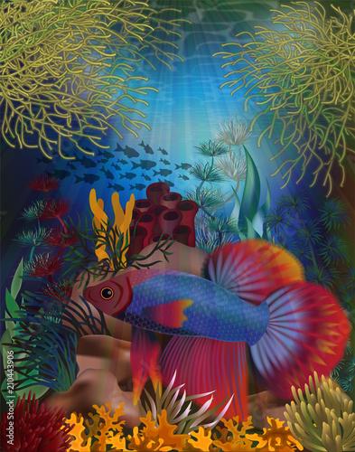 Foto op Plexiglas Zeemeermin Underwater banner with Betta Splendens Thai fighting fish, vector illustration