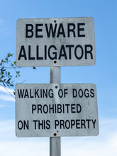 Beware Alligator Warning Sign, Walking Of Dogs Prohibited - Davie, Florida, USA