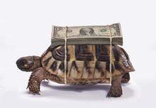 Tortuga Cargando Billetes De D...