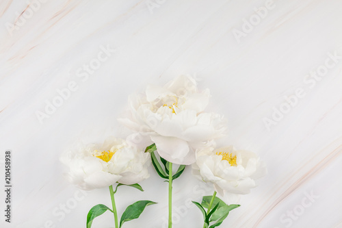 Poster de jardin Nénuphars White peony flowers on marble background