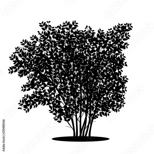 Fotografia silhouette bush with leaves and shadow