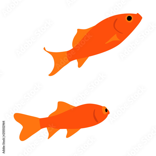 仲良く泳ぐ二匹の金魚のイラスト Adobe Stock でこのストックベクター