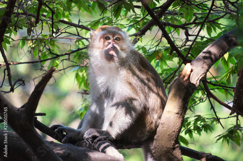 Staande foto Aap A cute monkey lives in a natural forest of Thailand