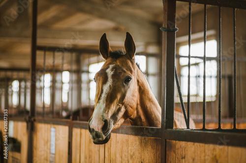Foto op Canvas Paarden Beautiful horses, animals, pasture, stables, horseback riding
