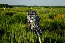 Plastic Decoy Owl Perched On A...