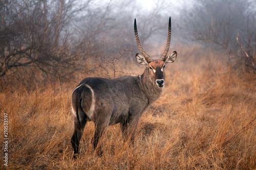 Door stickers Antelope Wasserbock