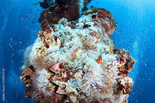 Staande foto Koraalriffen Coral reef garden in Palau, Micronesia