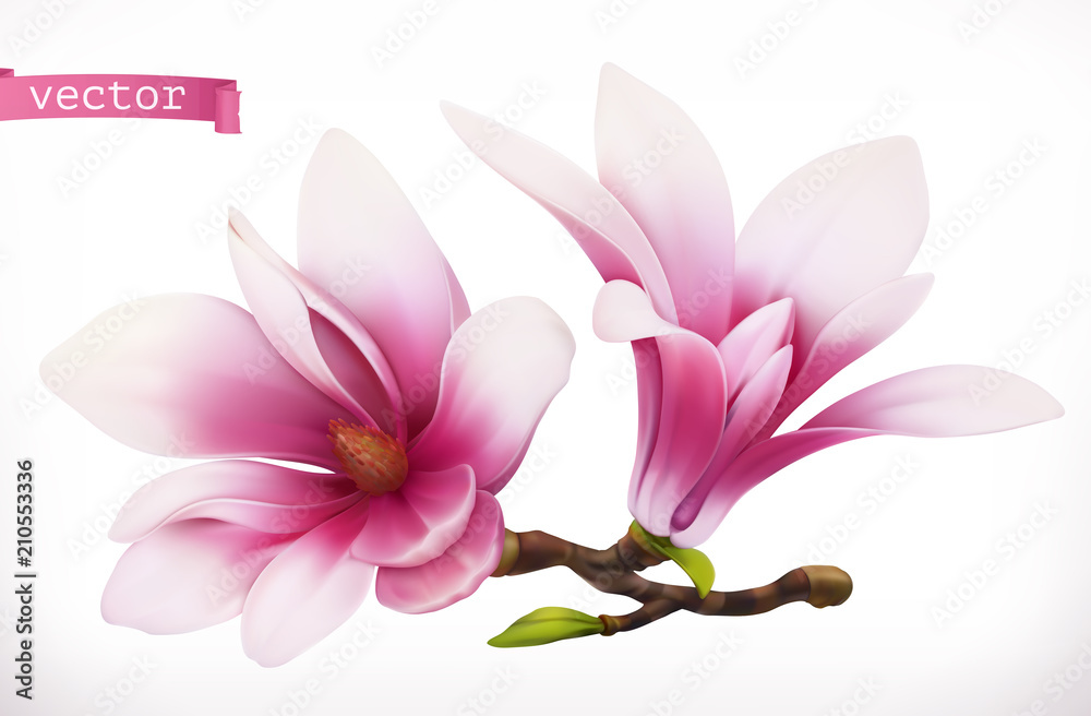 Fototapeta Magnolia. 3d realistic vector icon