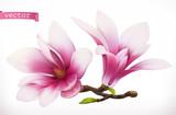 Fototapeta Kwiaty - Magnolia. 3d realistic vector icon