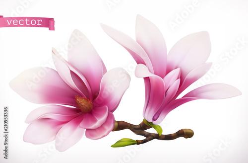 Fototapeta Magnolia. 3d realistic vector icon obraz