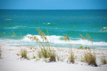 Row Of Beautiful Sea Oats Against A Aqua Blue Ocean With Breaking Waves In The Background.