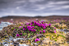 Lato Na Spitsbergenie