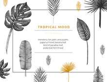 Vector Contemporary Greeting Card With Tropical Graphics In Vintage Style. Hand Drawn Exotic Plant Template For Birthday, Business, Anniversary, Wedding, Party Invitation, Holidays.