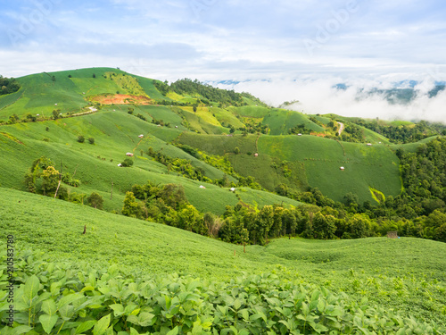 In de dag Pistache A landscape view of nature of green mountain at sunrise morning time with clear blue sky