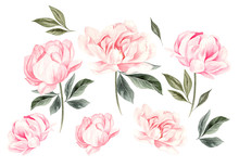 Beautiful Watercolor Set With Peony Flowers.