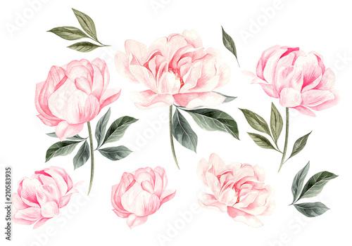 Fototapeta  Beautiful Watercolor set with peony flowers.