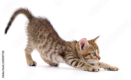 Foto op Aluminium Kat Kitten on white background.