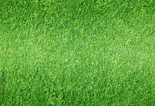 Foto op Plexiglas Groene Natural background of green grass