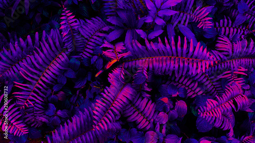 Fotografía  Tropical black light glowing leaves.