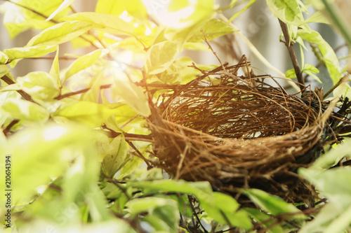 Fototapeta Empty bird nest in garden.Nest made from dry grass. obraz
