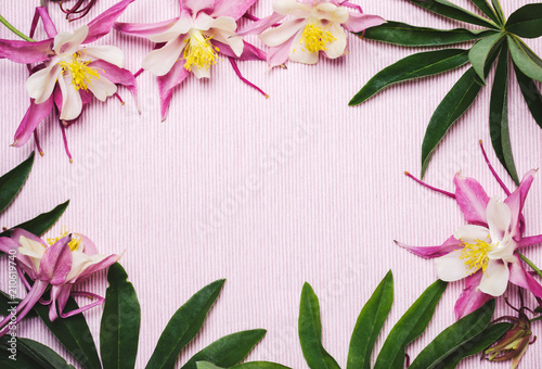 Staande foto Bloemen Floral summer pink background. Frame of aquilegia flowers and green leaves