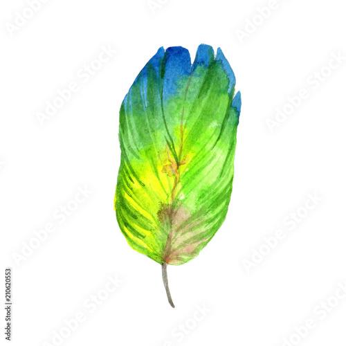 kolorowe-pioro-egzotycznego-ptaka