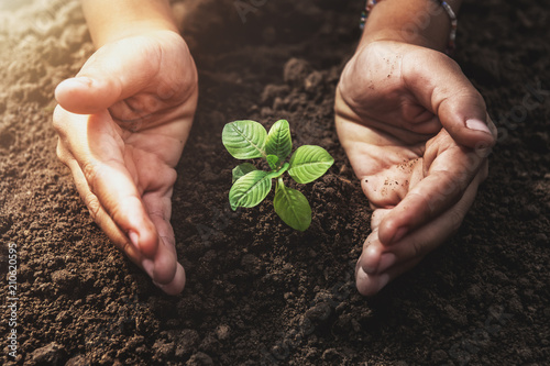 Poster de jardin Vegetal plant growing with hand protection and sunshine in garden. concept eco