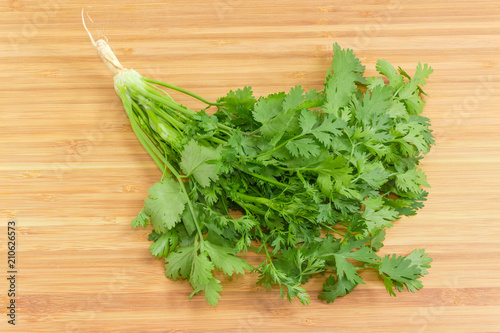 Young coriander with stalks, leaves and root on wooden surface