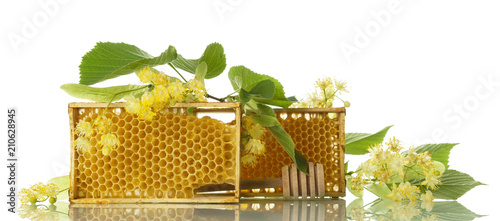 Photo Wooden frame with bee honeycomb, branch of Linden isolated on white